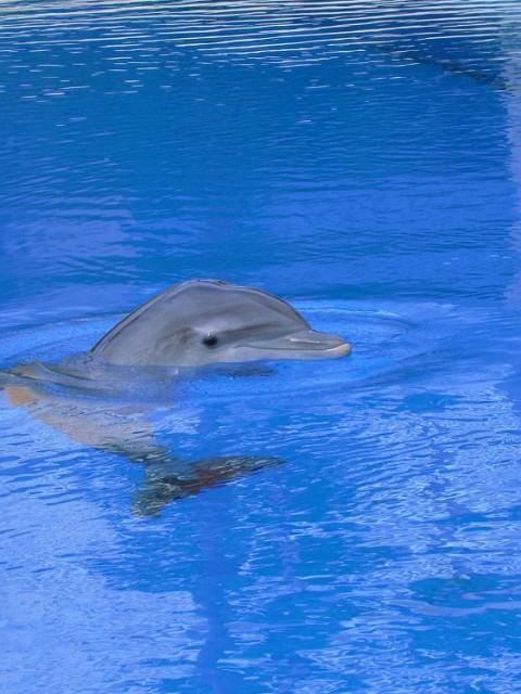 dolphin-211873 1000 hoch
