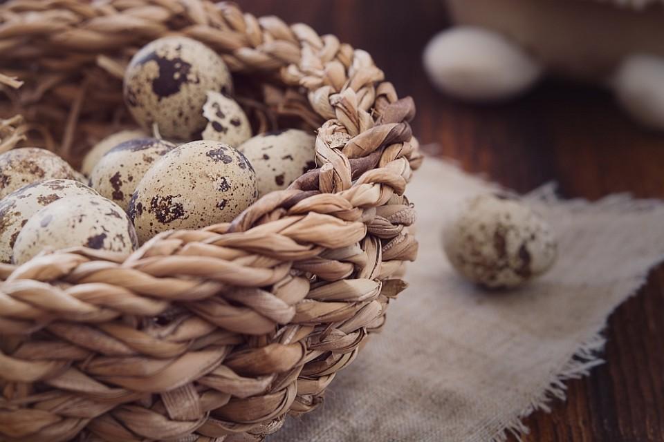 1000 breit quail-eggs-1247384